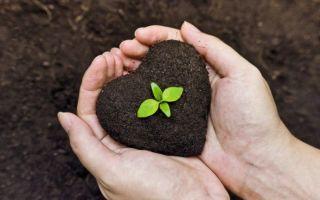 Кофейная гуща: питательное удобрение и защита от вредителей