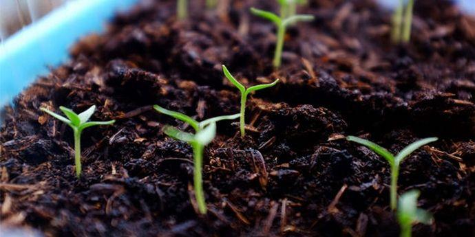 ростки на кофейной гуще