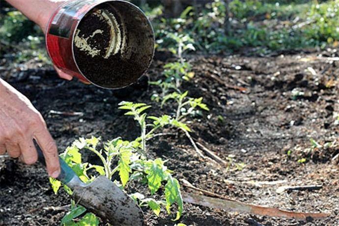 внесение кофейной гущи в почву