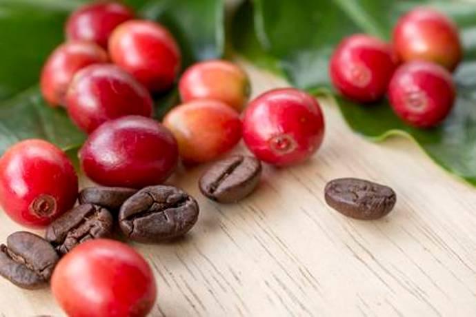 ягода кофе