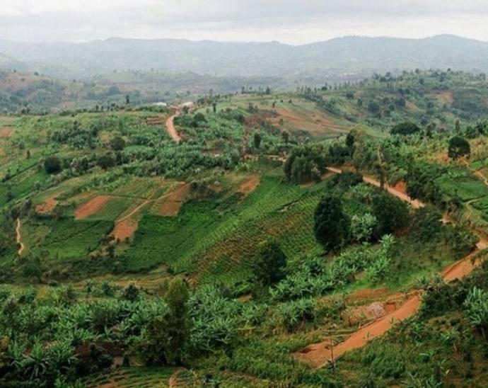 кофе в Бурунди