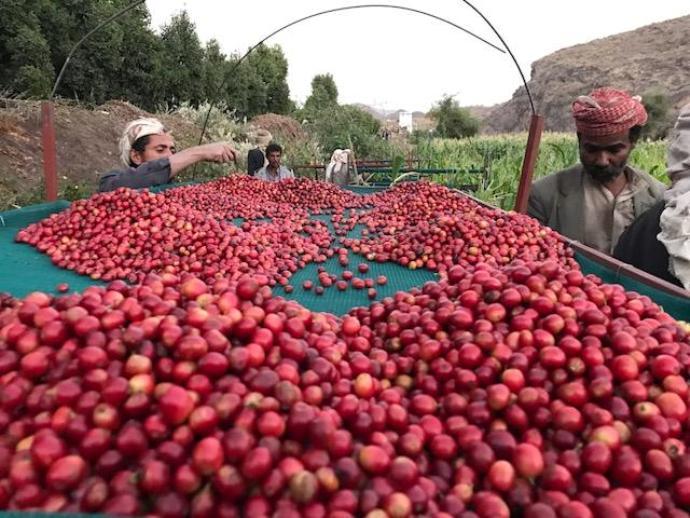 йеменский кофе