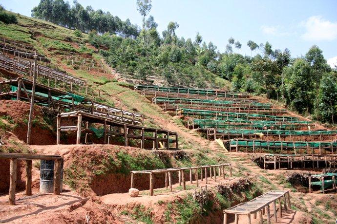 Бурундийский кофе