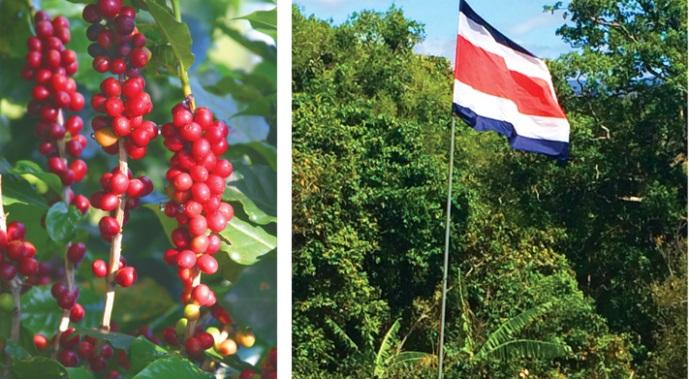 кофе Коста-Рики
